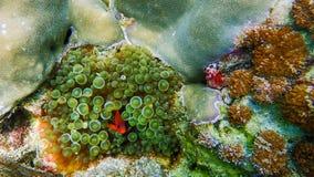 Beau récif coralien dans l'eau du fond Photographie stock