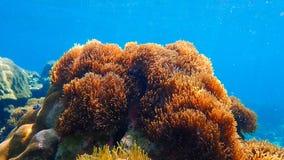 Beau récif coralien dans l'eau du fond Images libres de droits