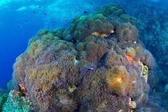 Beau récif coralien en parc national de Chumporn, Thaïlande image libre de droits