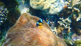 Beau récif coralien et poissons tropicaux sous-marins Image stock