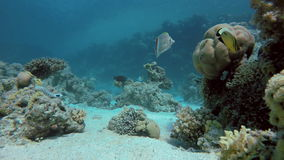 Beau récif coralien La vie dans l'océan banque de vidéos