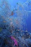 Beau récif coralien outre d'aumônier Burgos, Leyte, Philippines Images stock