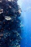 Beau récif coralien près de la ville de Dahab de l'Egypte Image libre de droits