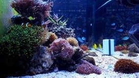 Beau réservoir rêveur d'aquarium de récif coralien Photos stock