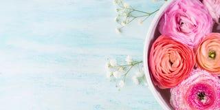 Beau ranunculus rose dans la cuvette avec de l'eau Photographie stock libre de droits