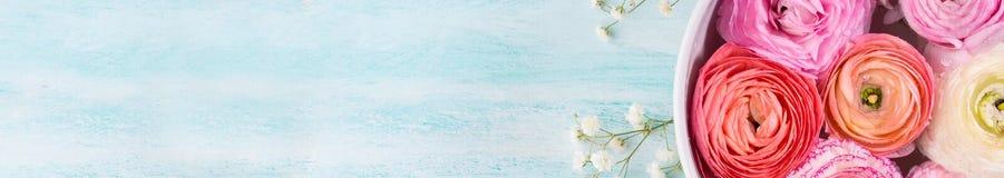 Beau ranunculus rose dans la cuvette avec de l'eau Images stock