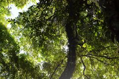 Beau rayon de soleil dans la forêt tropicale tropicale en Kew Mae Pan, l'AMI de Chaing, Thaïlande images stock