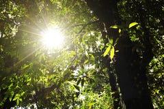 Beau rayon de soleil dans la forêt tropicale tropicale en Kew Mae Pan, l'AMI de Chaing, Thaïlande Photos stock