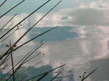 Beau reflétez de quelques nuages dans un lac tranquille avec des usines photographie stock libre de droits