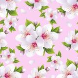 Beau rose sans couture de modèle avec la fleur de Sakura Image libre de droits