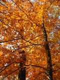 Beau rouge Image stock