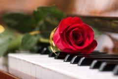 Beau rouge s'est levé sur le clavier de piano Photos libres de droits