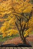 Beau rouge vibrant coloré et arbres d'érable japonais jaunes en détail de paysage de région boisée de forêt d'Autumn Fall en angl photos libres de droits
