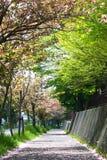 Beau Sakura Photographie stock
