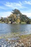 Beau saule par un lac Photos stock