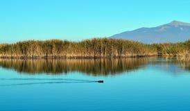 Beau scape de lac et une foulque maroule Photo libre de droits