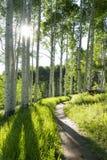 Beau sentier de randonnée de montagne par Aspen Trees de Vail le Colorado Photos stock