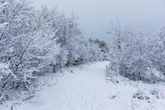 Beau snowsacpe Image libre de droits