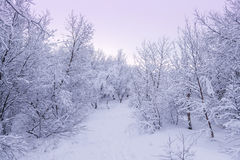 Beau snowsacpe Images libres de droits