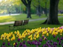 Beau stationnement au printemps Photographie stock libre de droits