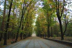 Beau stationnement coloré d'automne Arbres et lames d'automne photo stock