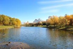 Beau stationnement d'automne Automne à Minsk Arbres et lames d'automne Autumn Landscape Parc en automne Forêt en automne Images stock
