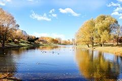 Beau stationnement d'automne Automne à Minsk Arbres et lames d'automne Autumn Landscape Parc en automne Forêt en automne Photo stock