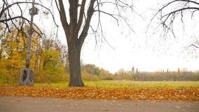 Beau stationnement d'automne La caméra déplace parallèle à la route HD banque de vidéos