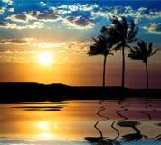 Beau sunet avec le palmier Photos libres de droits