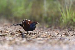 Beau support d'oiseau rare sur le fond de nature Photo libre de droits