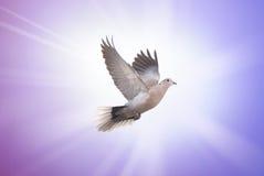Beau symbole de colombe de la foi photos libres de droits