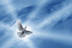 Beau symbole de colombe de la foi photographie stock libre de droits