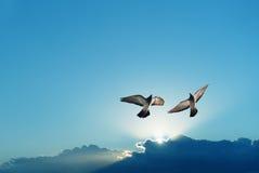 Beau symbole de colombes de la foi image libre de droits