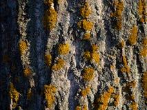 Beau textrure d'arbre Photographie stock