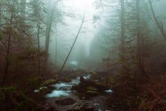 Beau tir d'un lac dans une forêt dans un terrain rocheux images libres de droits