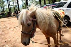 Beau tour brun de cheval photos stock