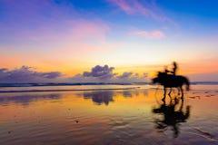Beau tour de cheval de coucher du soleil Photographie stock