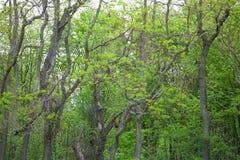 Beau tronc d'arbres de tache floue et lumière du soleil dans le foret à Boston Image libre de droits