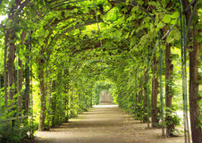 Beau tunnel fait d'arbres Photos libres de droits