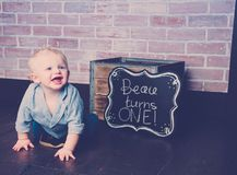 Beau Turns One Year Old photographie stock libre de droits