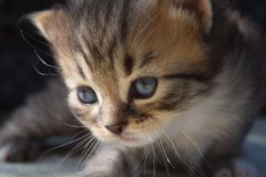 Beau un petit chaton photo stock