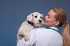 Beau vétérinaire féminin tenant le chien mignon photo libre de droits