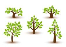 Beau vecteur d'arbre sur un fond blanc Images stock