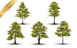 Beau vecteur d'arbre sur un fond blanc Photographie stock