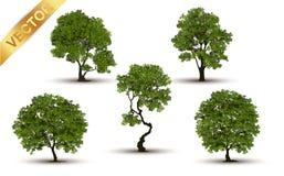 Beau vecteur d'arbre sur un fond blanc Photo stock