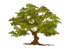 Beau vecteur d'arbre sur un fond blanc Photos libres de droits