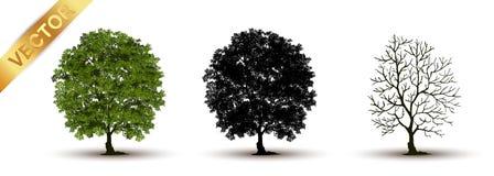 Beau vecteur d'arbre sur un fond blanc Images libres de droits