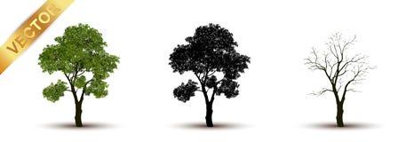 Beau vecteur d'arbre sur un fond blanc Photographie stock libre de droits