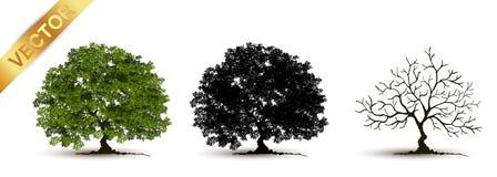 Beau vecteur d'arbre sur un fond blanc Image stock