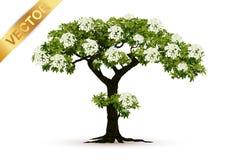 Beau vecteur d'arbre sur un fond blanc Photos stock